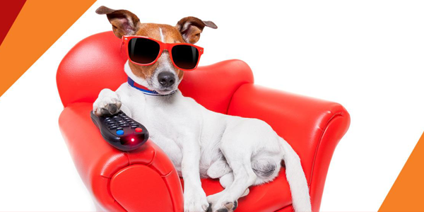 Conheça o DOG TV da SKY